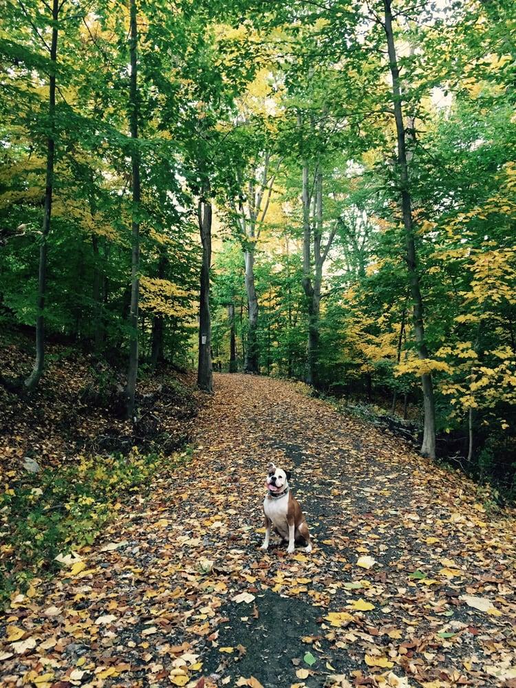 East Rumbrook Park Dog Run