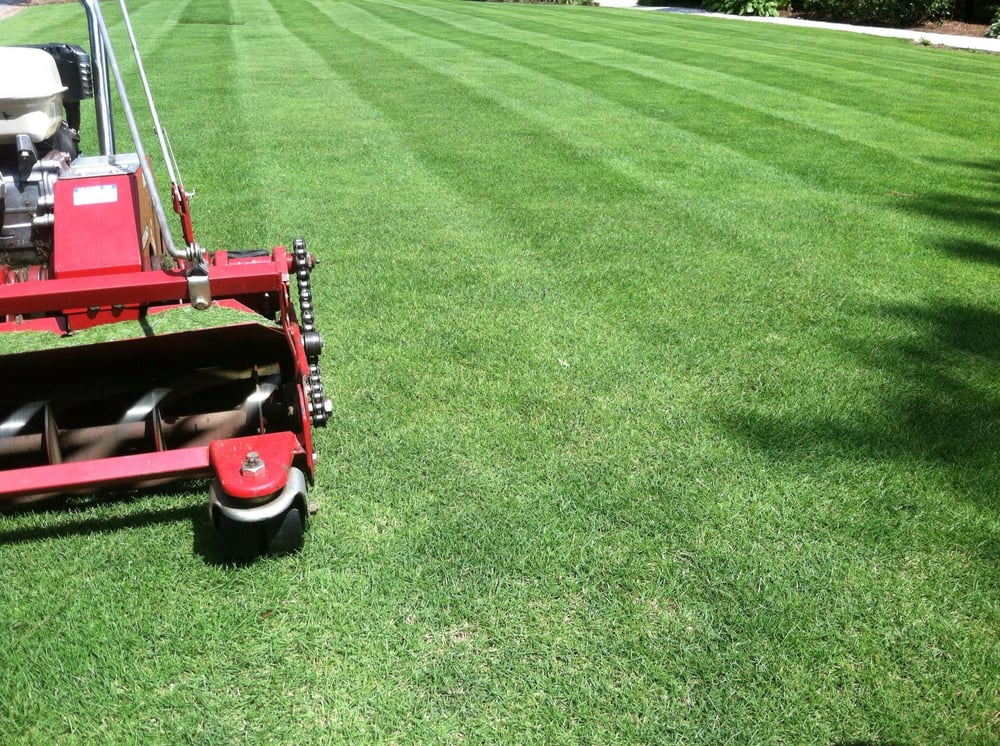 Zoysia is best when cut by reel mowers  This lawn is cut at