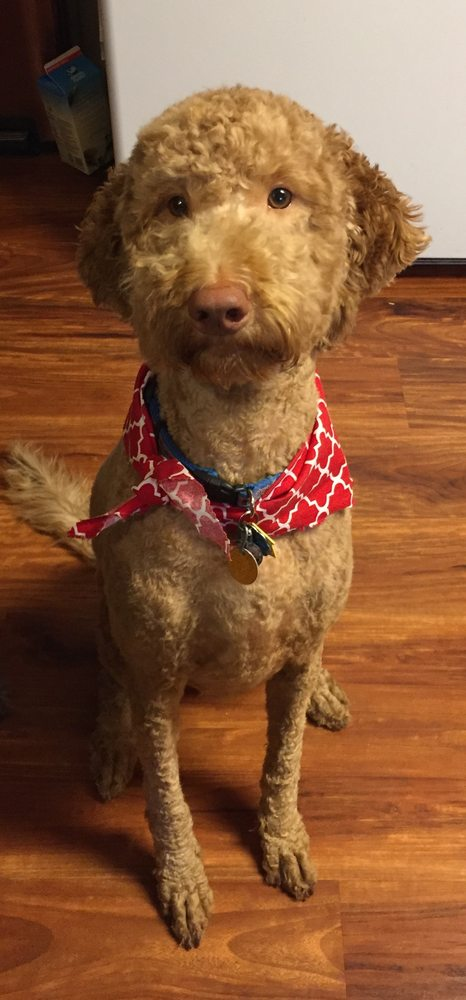 Indy Mobile Pet Grooming / Beech Grove Pet Grooming: Beech Grove, IN