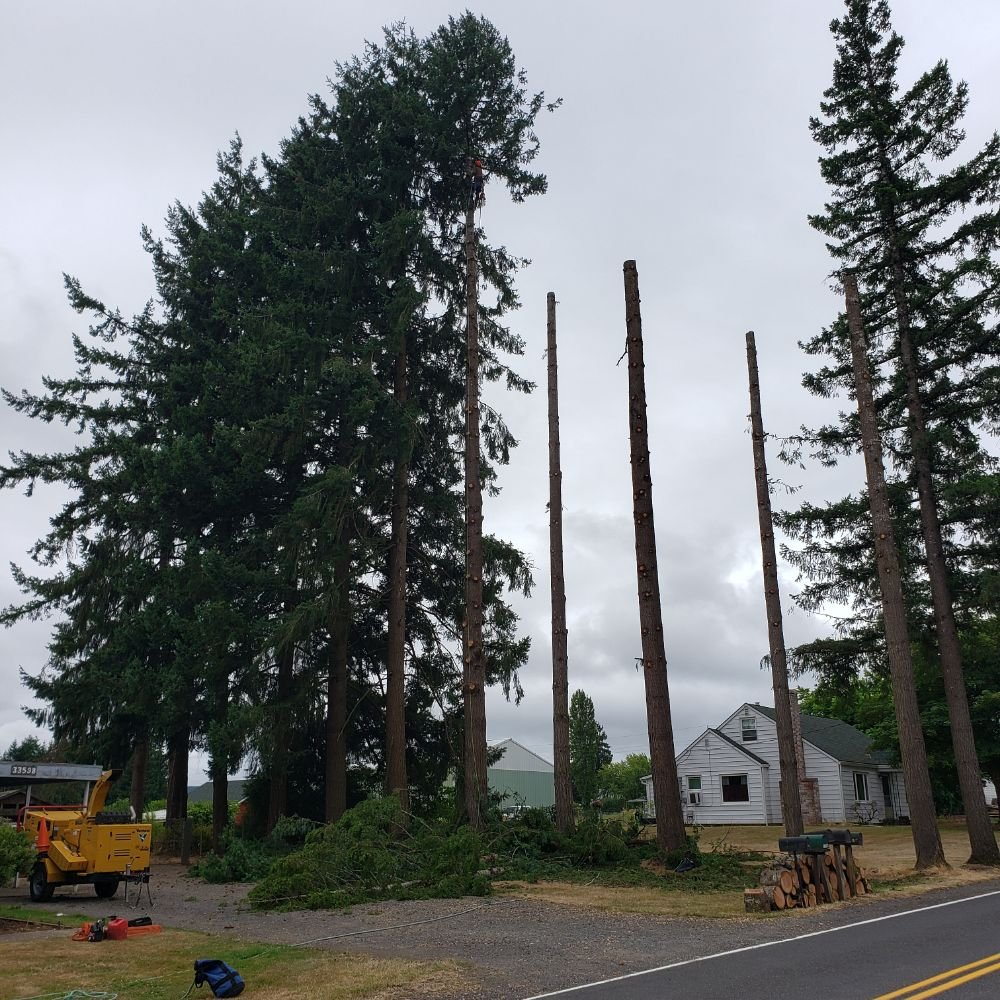 Watts Tree Service: Gaston, OR
