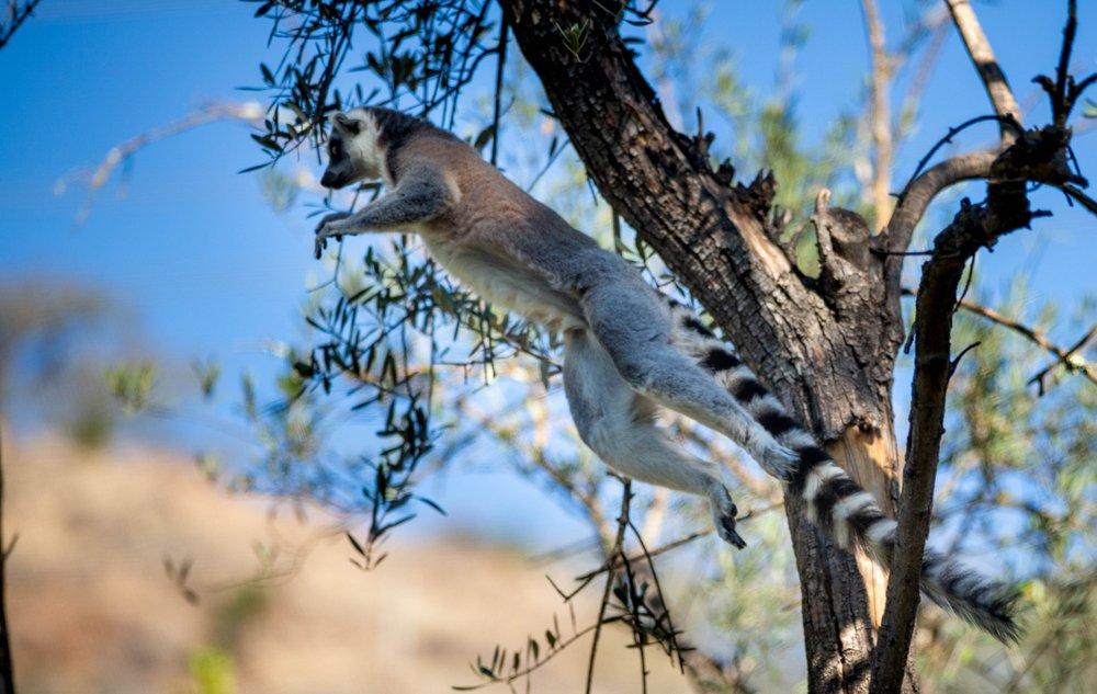 Safari West: 3115 Porter Creek Rd, Santa Rosa, CA
