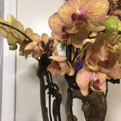 In Water Flowers - 55 Photos & 70 Reviews - Floral Designers - Lower Pacific Heights, San Francisco, CA - Phone Number - Yelp