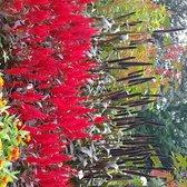 Photo Of Rotary Botanical Gardens   Janesville, WI, United States