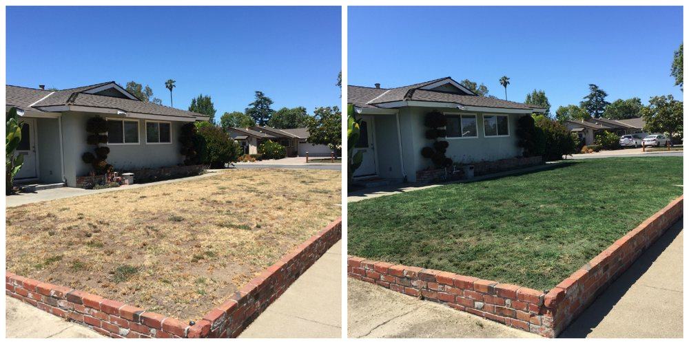 Lawn Painting Before and After