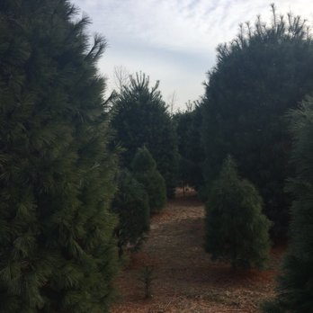 McLaughlin Tree Farm - Christmas Trees & Nursery - Christmas Trees ...