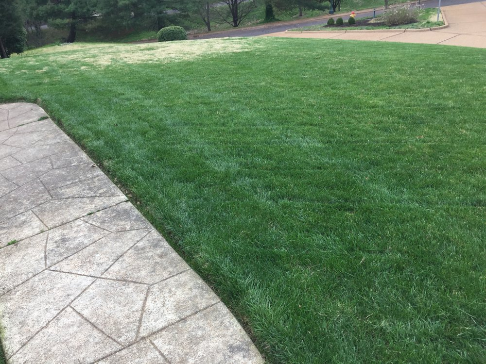 The Lawn Guy: St. Louis, MO