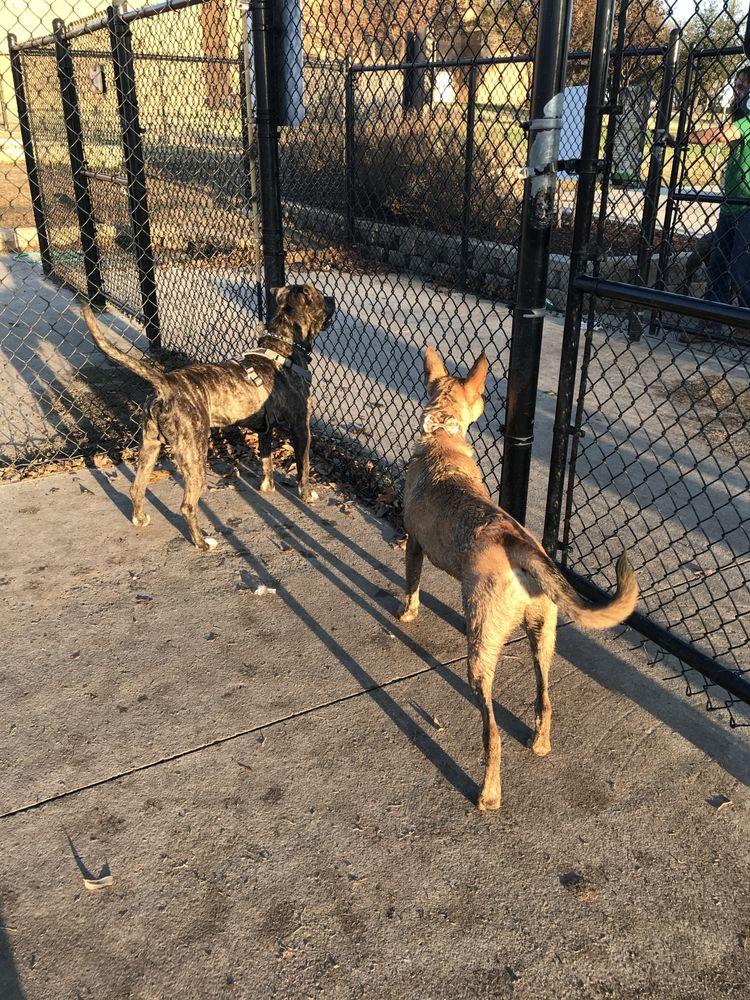 Rosemeade Dog Park: 1330 E Rosemeade Pkwy 8 Reviews, Dallas, TX
