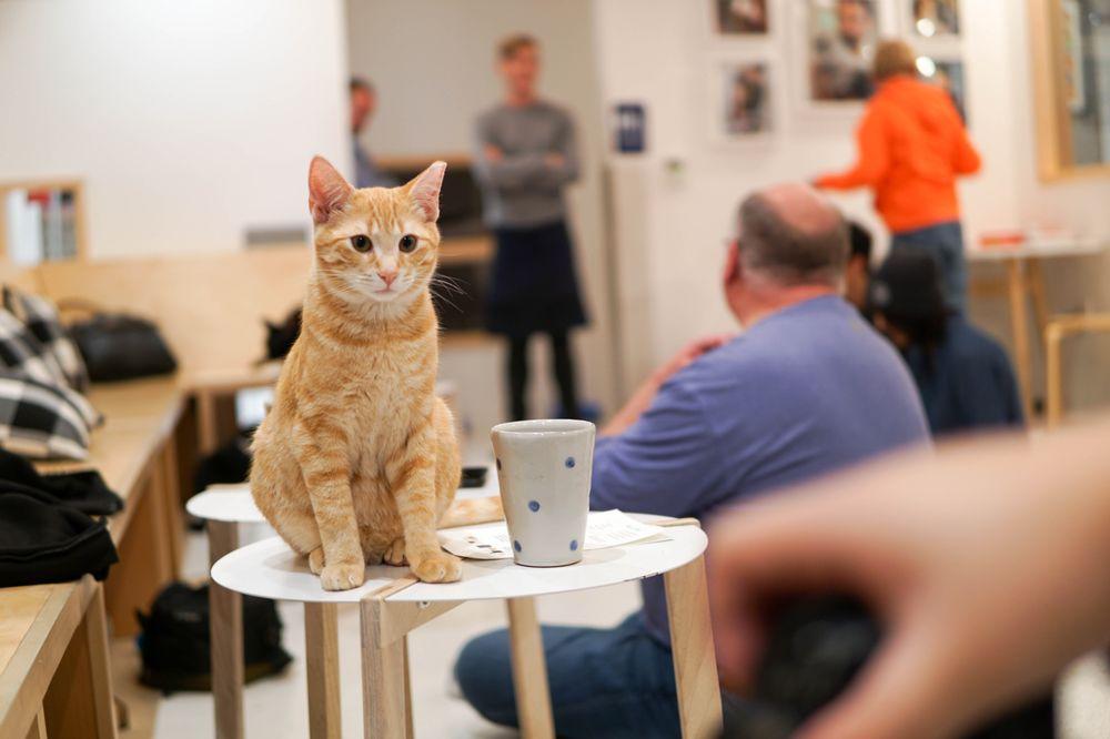 Cat Cafe San Francisco Yelp