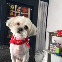 Petsburgh Grooming - Pet Groomers - 2601 Brownsville Rd