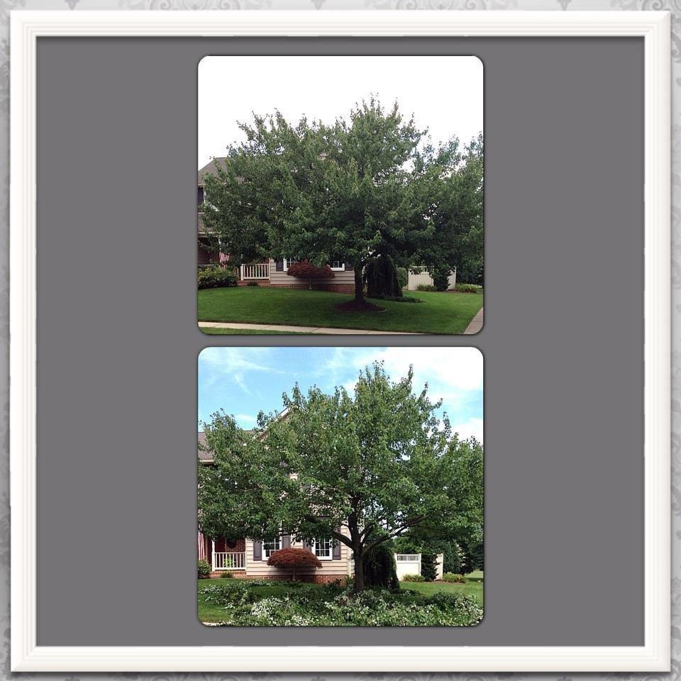 Lanco Tree Services: Akron, PA