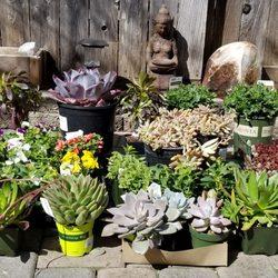Photo Of King S Nursery Santa Rosa Ca United States My