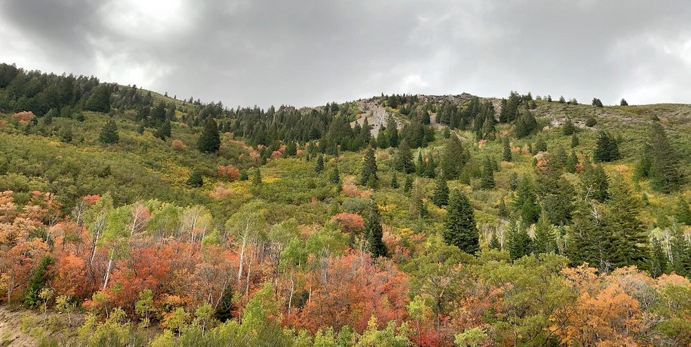 American Fork Canyon: Alpine Loop Scenic Byway, Pleasant Grove, UT