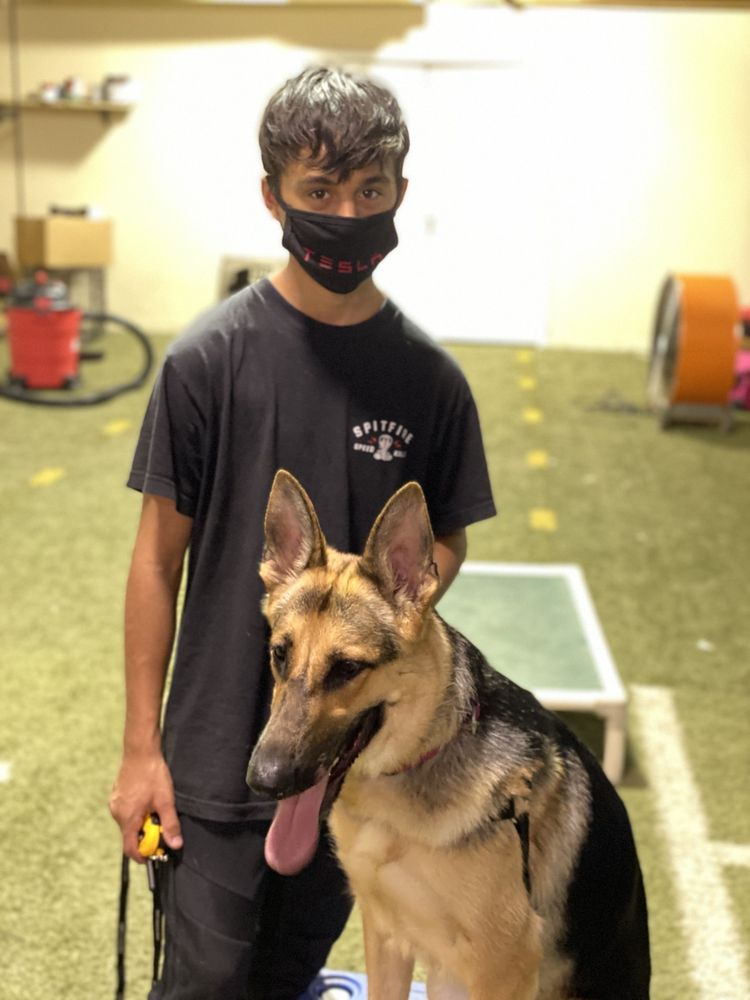 ACDT - Absolute Control Dog Training