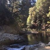 Garden Of Eden Henry Cowell Redwoods State Park 81 Photos 79