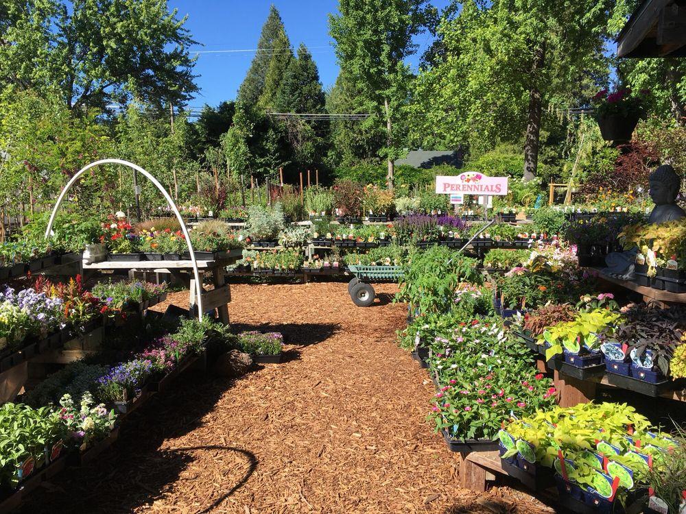 Native Grounds Nursery & Garden Center: 1172 S Mount Shasta Blvd, Mount Shasta, CA