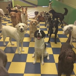 Dog School 20 Reviews Dog Walkers 1737 South St
