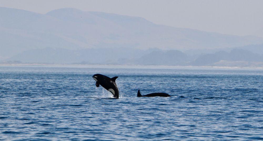 Santa Cruz Whale Watching