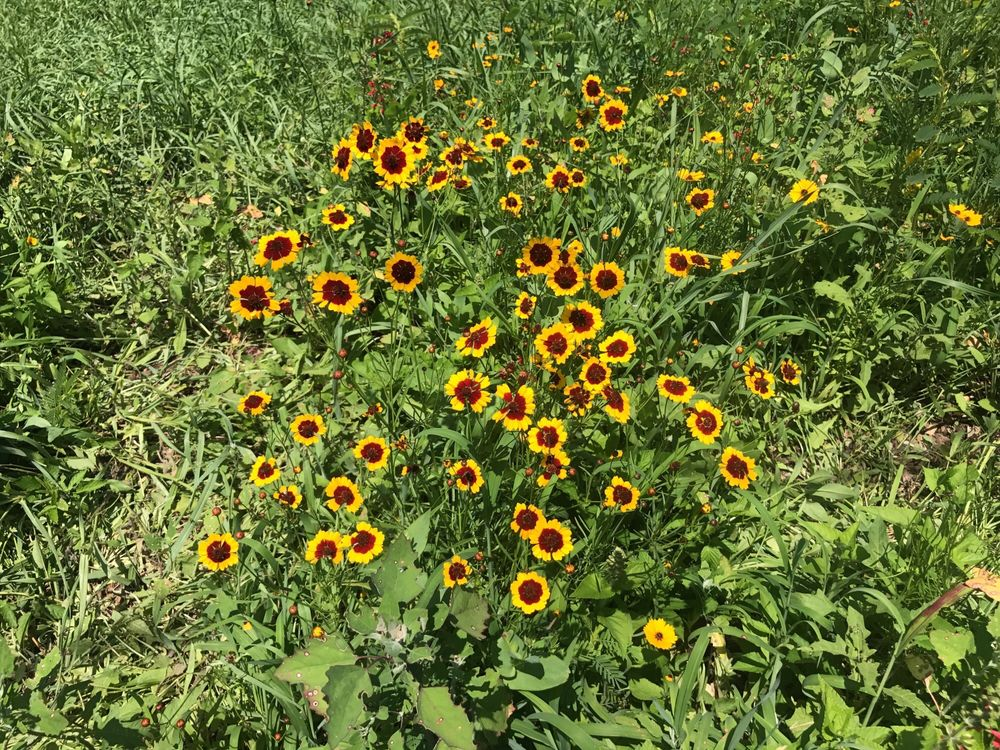 The Anderson Sunflower Farm: 3360 Shiloh Rd, Cumming, GA