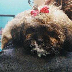 Lovable pets 33 photos pet stores 1313 grand ave billings mt photo of lovable pets billings mt united states solutioingenieria Images
