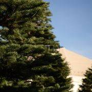 Photo of Valley View Christmas Tree Farms - San Diego, CA, United States.