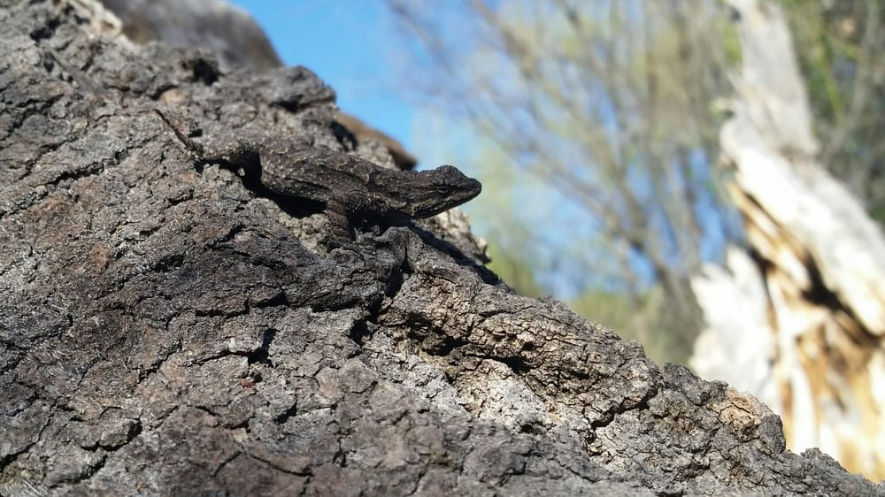 Hassayampa River Preserve: 49614 US Hwy 60, Wickenburg, AZ