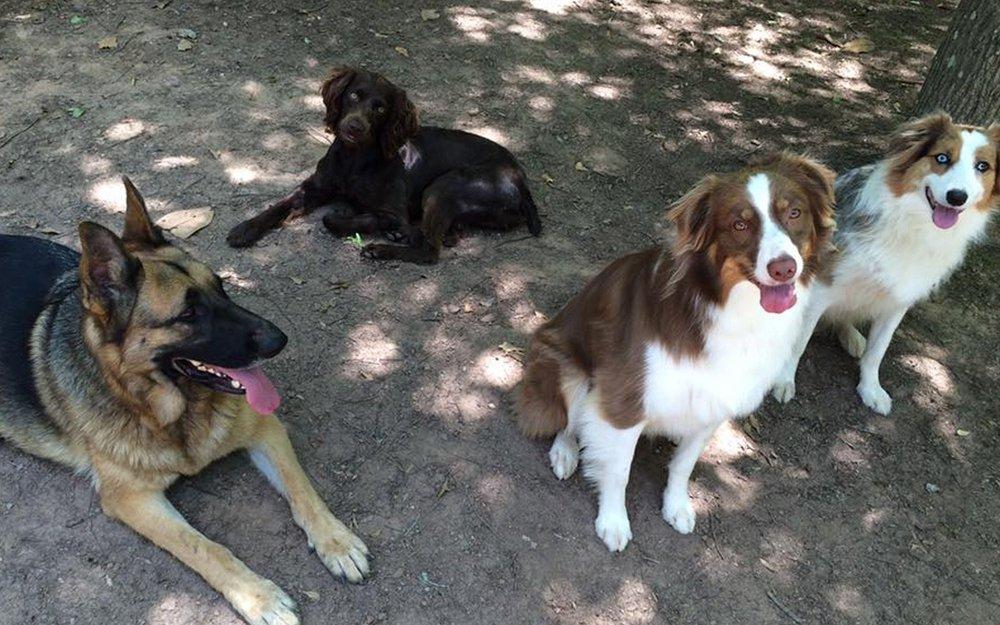 Dog House Kennel Grooming Newnan Ga