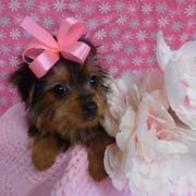 Pauley's Pups - 33 Photos & 21 Reviews - Pet Stores - 12100