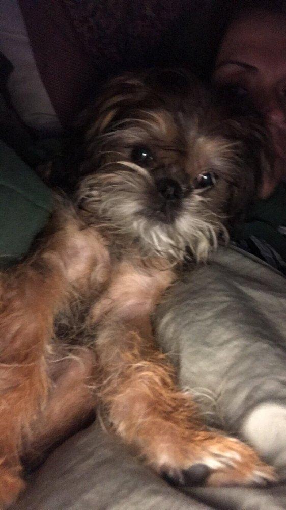 The Posh Pup: 10920 Farmington Rd, Livonia, MI
