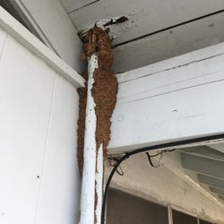 termites honolulu Termimesh protects hawaiian homes from termites without the use of chemicals based in honolulu -offering hawaii termite prevention since 1994.
