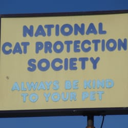 National Cat Society Newport Beach Ca