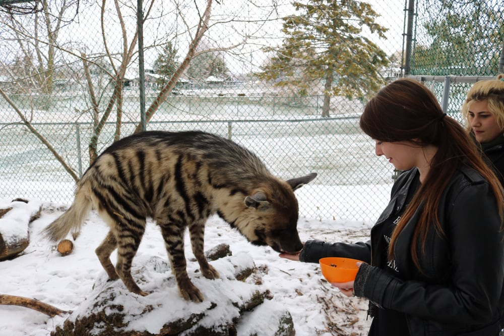 0c18fb1837fc Jungle Cat World Wildlife Park - 82 Photos   23 Reviews - Zoos ...
