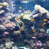 The Dallas World Aquarium 1357 Photos 668 Reviews