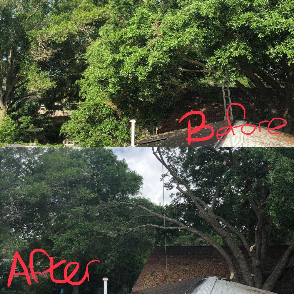 Photo of Tree Stooges: Trinity, FL