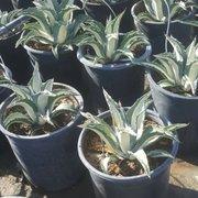 Macias Nursery 26 Photos Nurseries Gardening 29900 Sierra