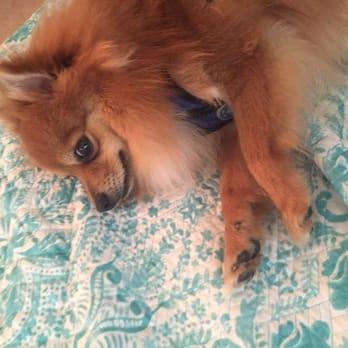 Dog Grooming Marianna Fl
