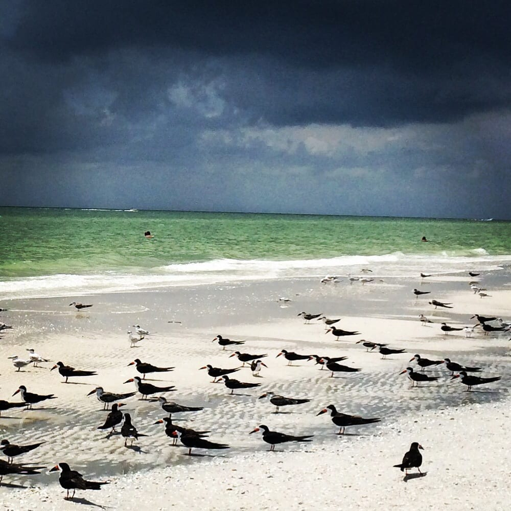Marco Island Beaches: Hang With The Birds