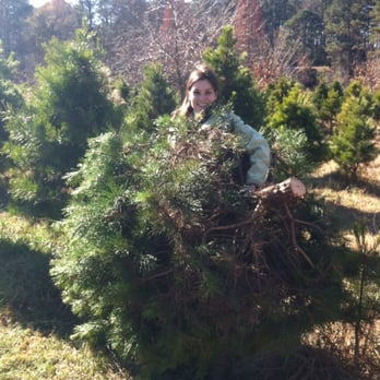 Photo Of Back Achers Christmas Tree Farm Raleigh Nc United States Found