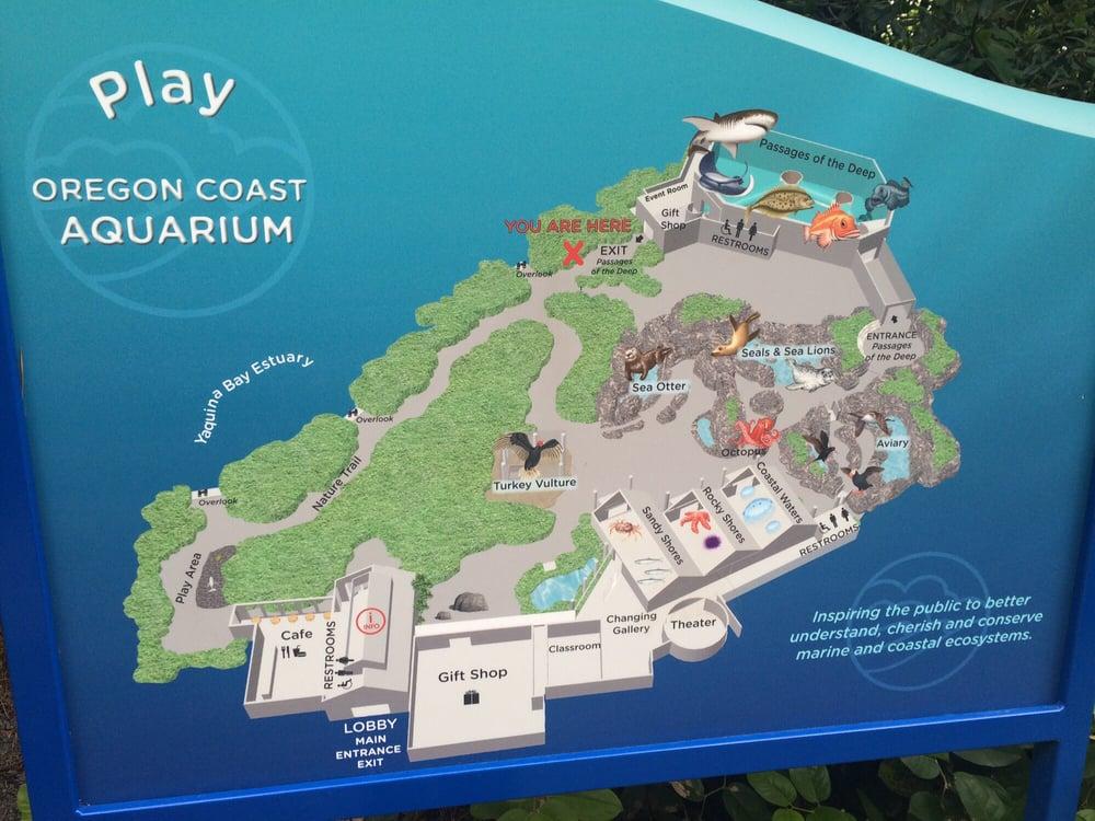 Newport Aquarium Map 1000 Aquarium Ideas