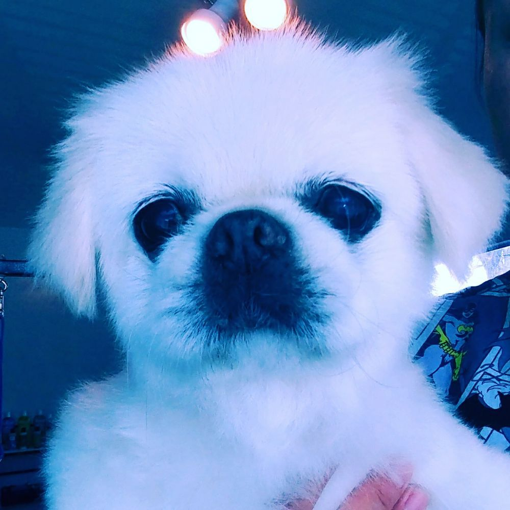 Peace Love and Pets- Grooming Salon: 3581 China Garden Rd, Placerville, CA