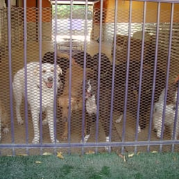 Photo Of The Pooch Patio   Dallas, TX, United States. Doggie Day Care