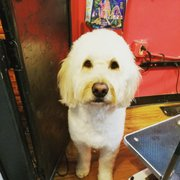 Jk grooming 58 photos 81 reviews pet groomers 1222 e 6th praise the paw dog grooming solutioingenieria Image collections