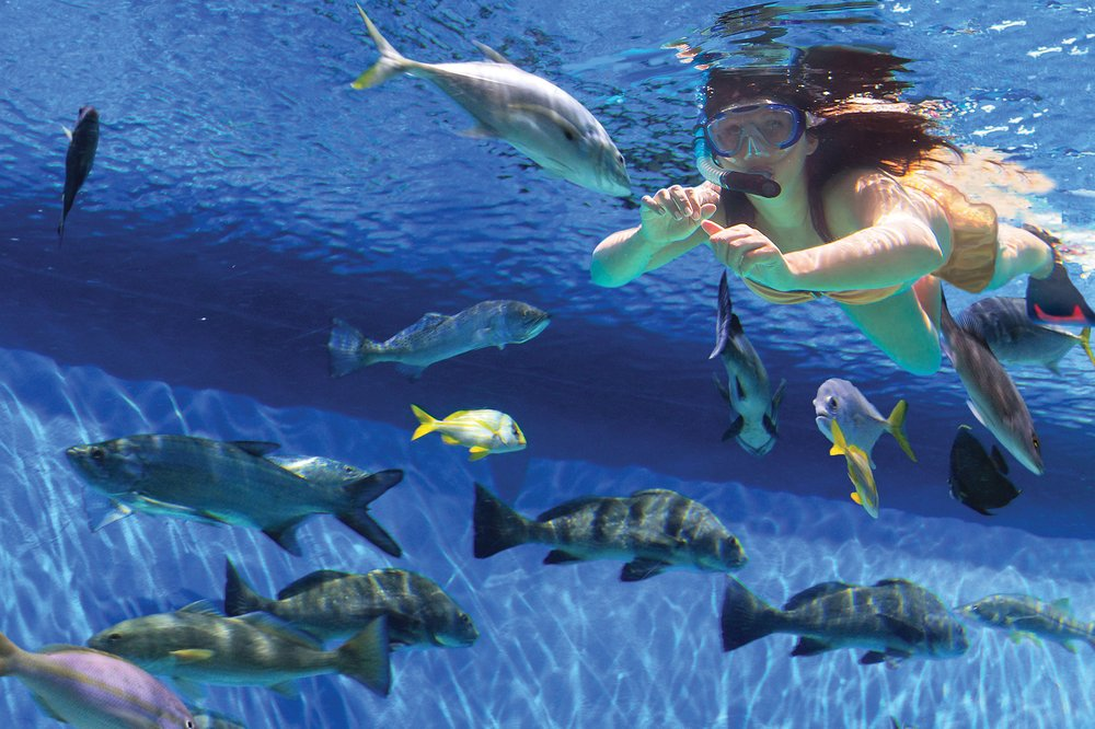 Swim with the Fish at RumFish Grill: 6000 Gulf Blvd, St Pete Beach, FL