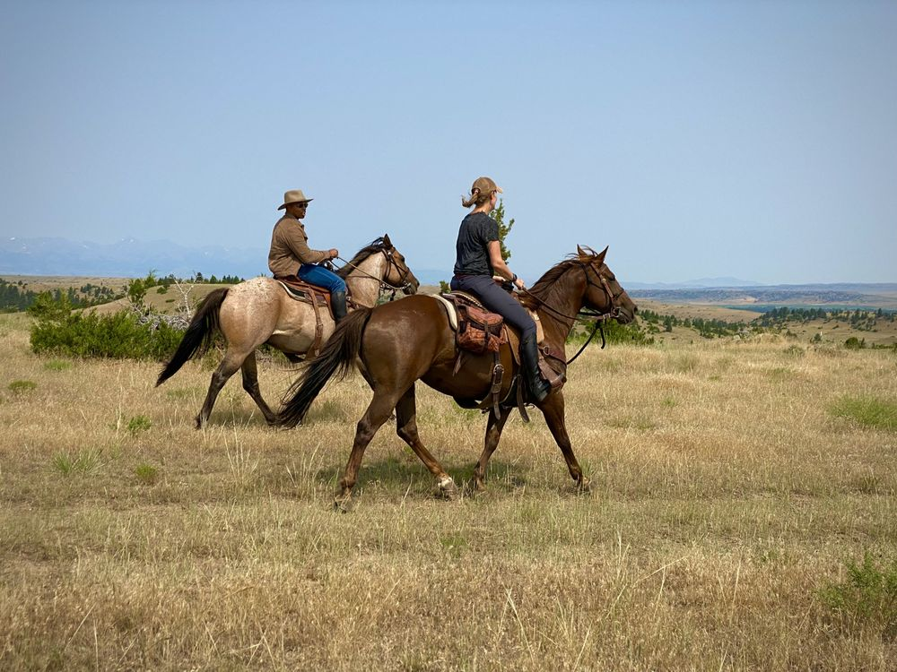Greycliff Creek Ranch: 9 Greycliff Creek Ln, Greycliff, MT