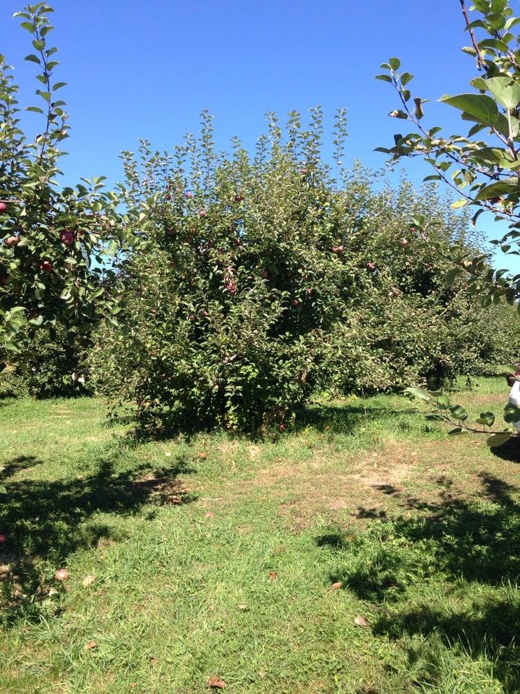 Hazelton Orchard: 20 Harantis Lake Rd, Chester, NH