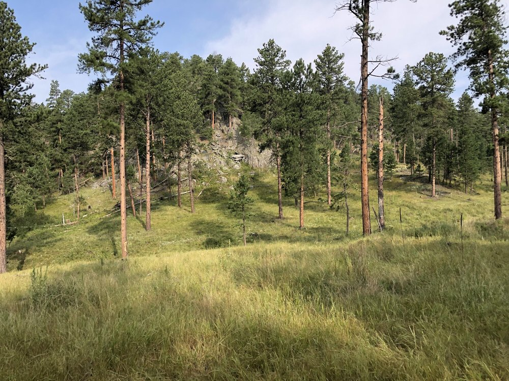 Black Hills Wilderness Edge: 1315 Old Hill City Rd, Keystone, SD