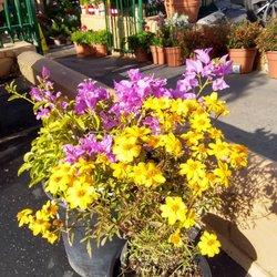 Photo Of Armstrong Garden Centers La Canada Flintridge Ca United States Fall