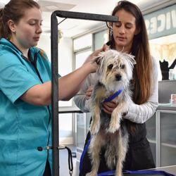 Pet groomers in santee yelp furology pet spaw solutioingenieria Image collections