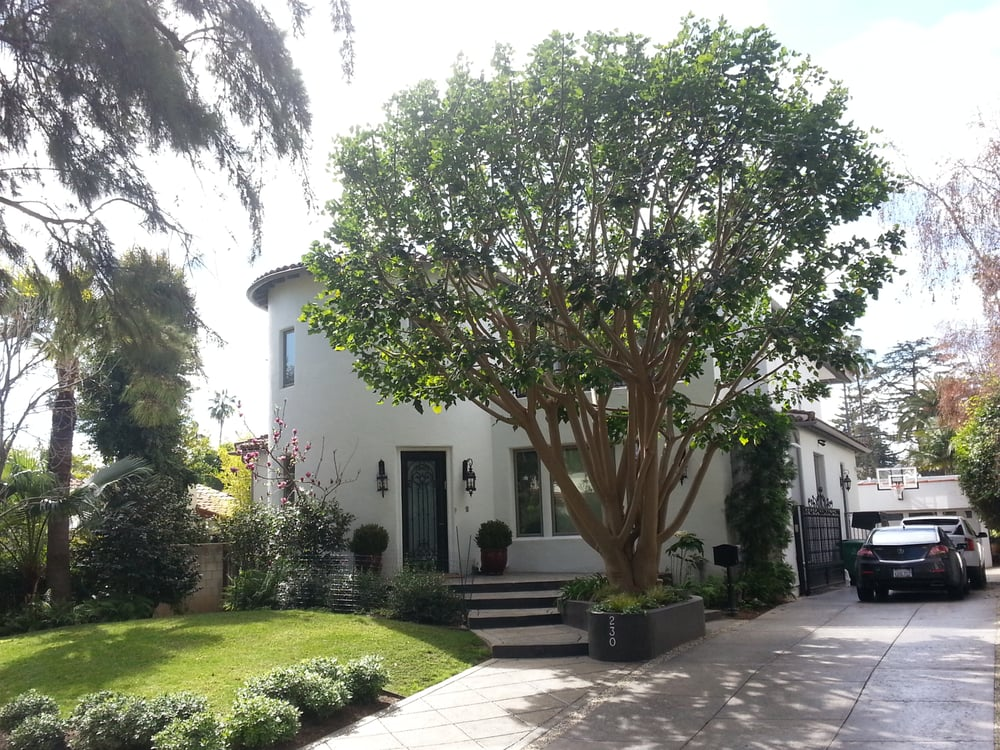 Tree Care Coral Tree Trimmed At Santa Monica Ca Yelp