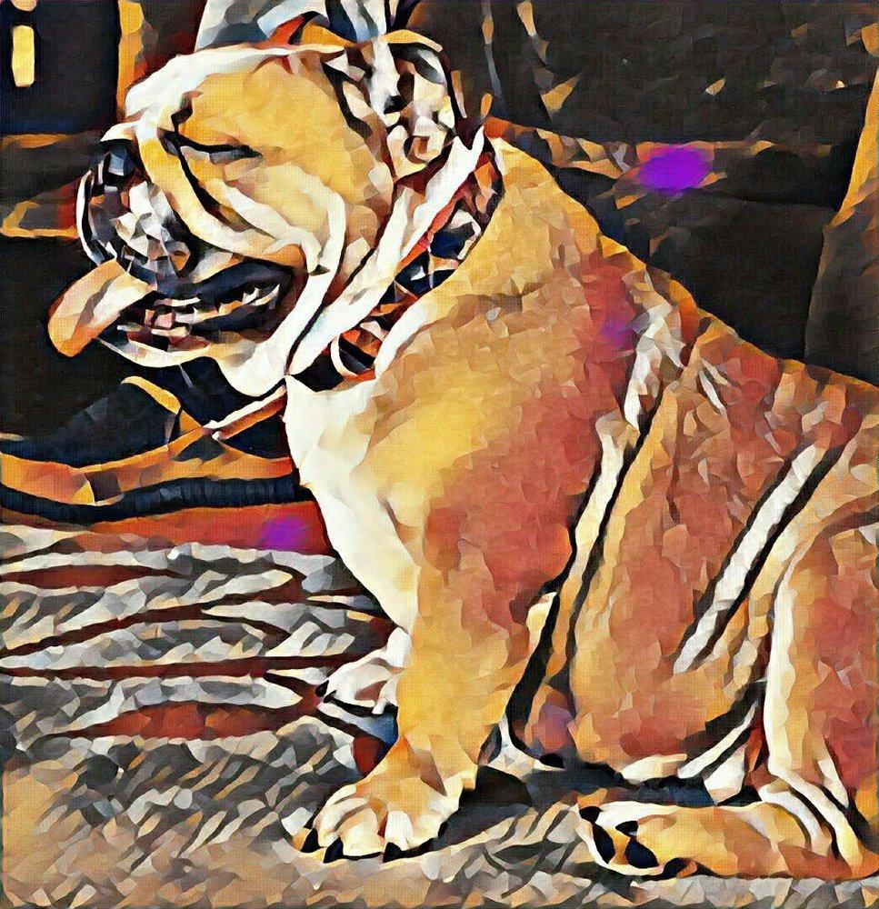 Lonely Acres English Bulldogs: Austin, MN