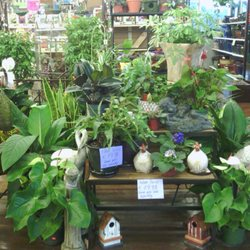 Mayo Garden Centers 14 Photos Nurseries Gardening 4718 Kingston Pike Knoxville Tn
